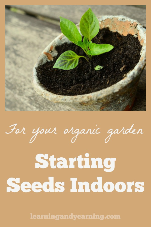 Spring is the time to start seeds indoors for later planting in the garden (6 – 8 weeks before the last frost for your area). Here are lots of tips for getting started. #organicgardening #seedstarting #starting seeds #seeds