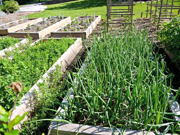 Wondering where to plant, what to plant, and how to plant? Learn the ins and outs of organic vegetable gardening from an experienced gardener!