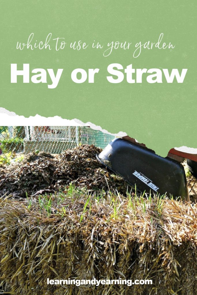 Hay or straw? Which to use in your garden!