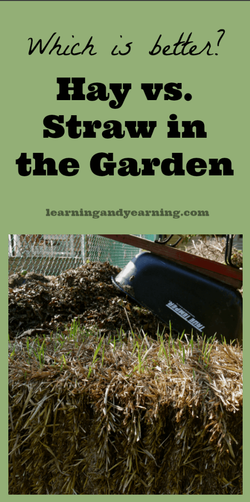 Hay vs  Straw in the Garden: Which is Better?