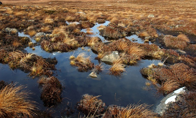 Peat Moss and the Sustainable Garden