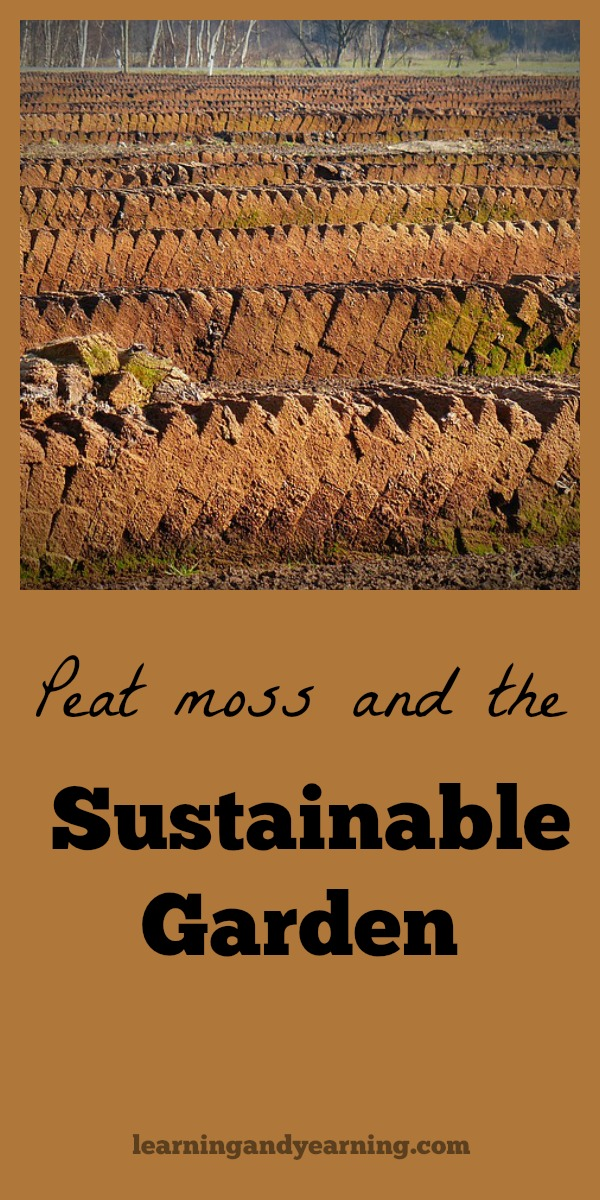 Peat bogs act as earth's giant sponges and filters. They soak up rain and release it slowly. And they help to keep our water supply clean by absorbing chemicals, filtering pollutants, neutralizing harmful bacteria and trapping heavy metals and other toxins. But is harvesting peat moss sustainable? #peat #peatmoss #sustainable