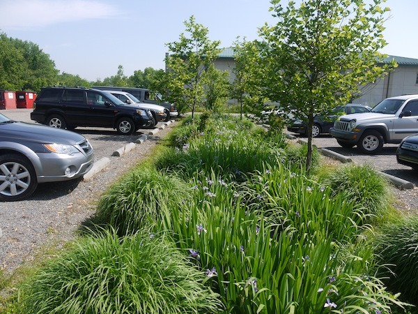 This rain garden captures water from the parking area. Note that the parking area is gravel, which also allows water to penetrate the ground.