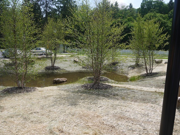 A fairly new rain garden at a farm.