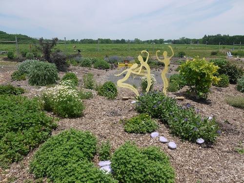 A medicinal herb garden.