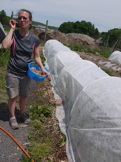The president of the community garden association by a low tunnel.
