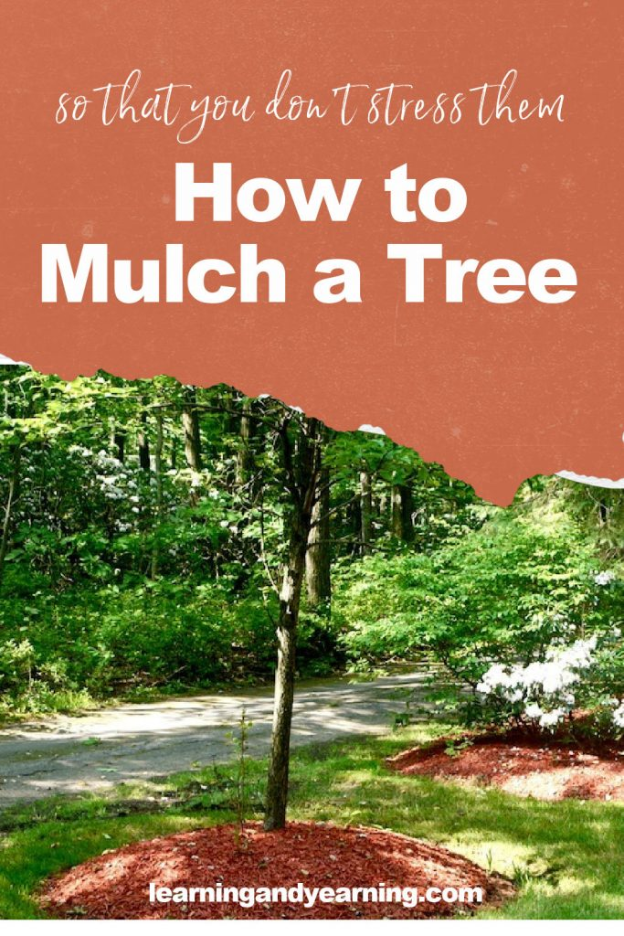 How to properly mulch trees!