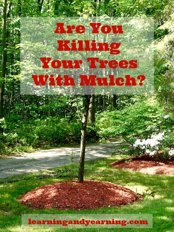 Are you killing your trees with mulch? Mulch is fabulous for trees, but incorrect mulching techniques can stress and even kill your trees.