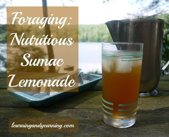Foraging for Nutritious Sumac - use it to make lemonade high in vitamin c