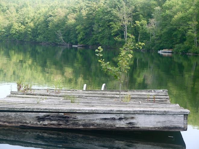 Our neighbors dock
