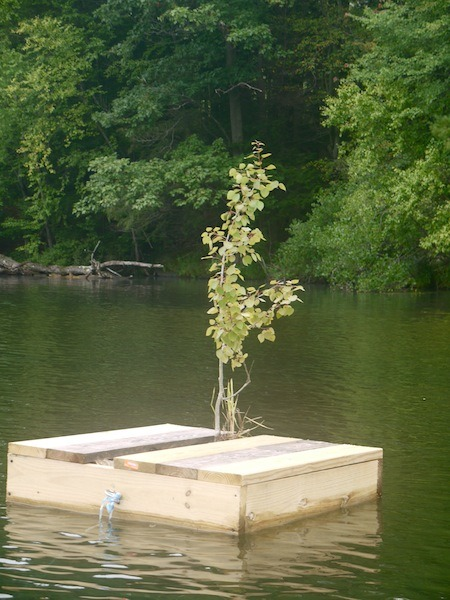 This tree has it's own dock!