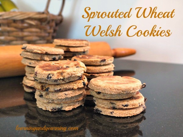 Welsh Cookies made with sprouted wheat flour. So yum! @learningandyearning