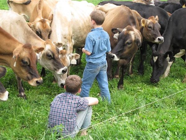 can farm life boost your immunity?