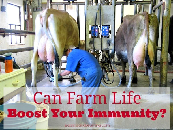 Can farm life boost your immunity? It's an historically proven phenomena that persons who live closest to the cows are often the healthiest, and strongest of their society?