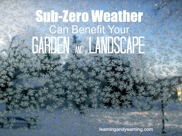 Sub-zero weather can provide some great benefits for your garden and landscape
