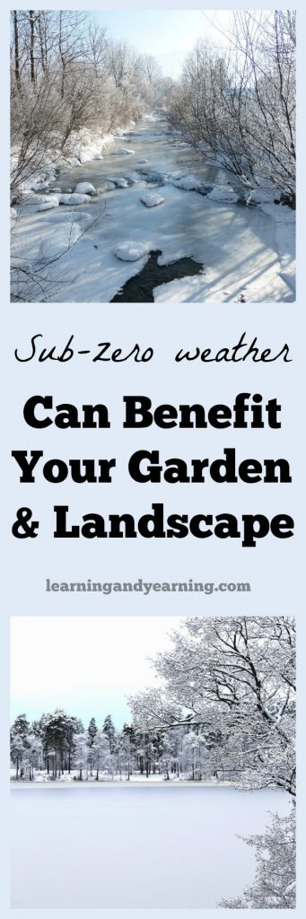Don't despair when the winter weather turns bitter cold. Sub-zero weather can actually benefit your garden and landscape!