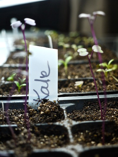 Can Fluorescent Shop Lights Be Used To Start Seeds?