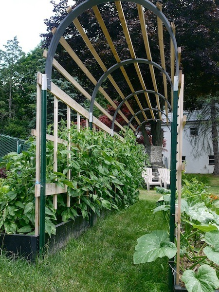 Building a Trellis for Tomato Plants