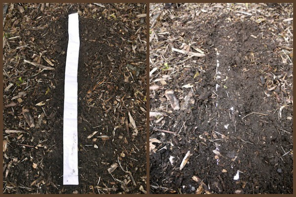 Lay the seed tape in your garden (l), and cover with soil (r).