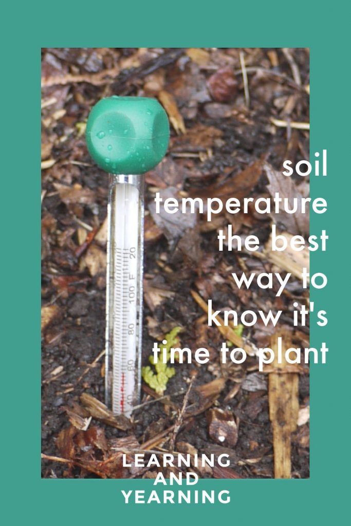 Soil temperature: the best way to know it's time to plant!