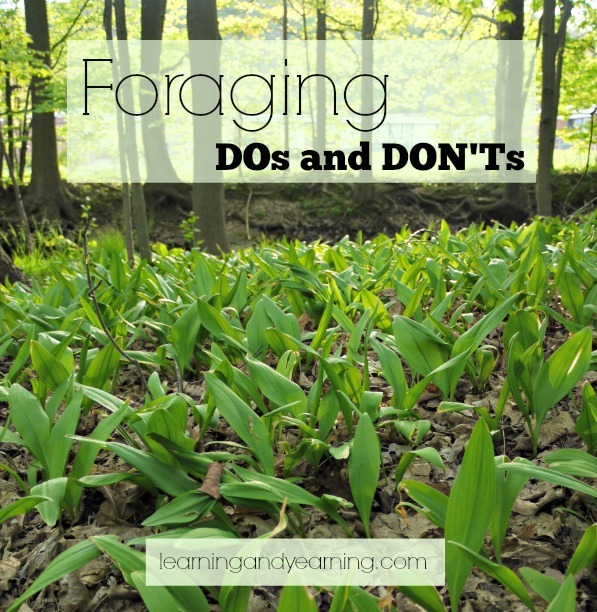 Foraging DOs and DON'Ts