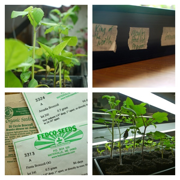 Confessions of a Master Gardener @learningandyearning