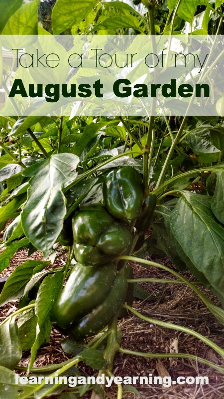 Come on over and take a tour of my August Garden