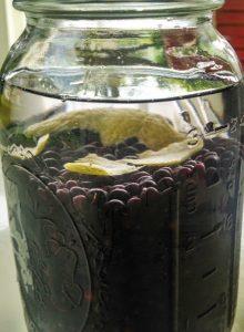 Elderberry Liquor