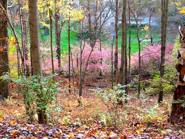 Fall: The Perfect Time for a Hike