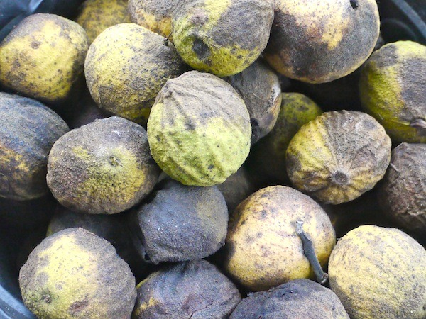 how to clean walnuts from shells