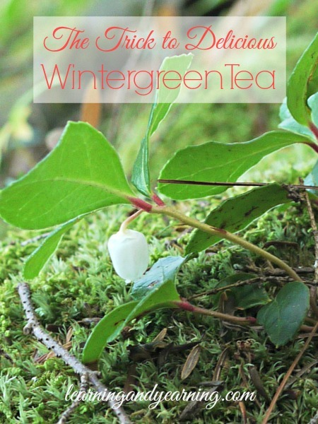 If you've foraged wintergreen and used it to make wintergreen tea, you may have been disappointed. Here's how to get delicious flavor out of those leaves.