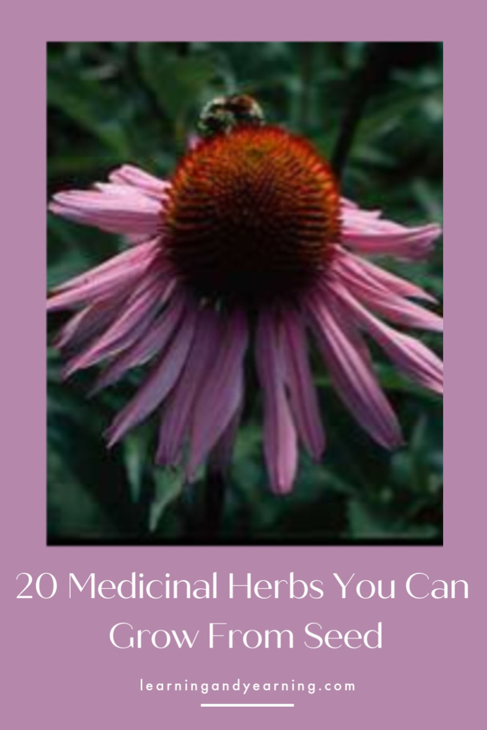20 medicinal herbs you can grow from seed!