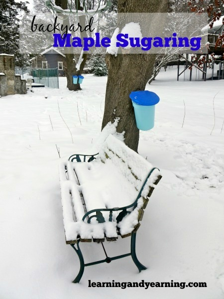 Have a maple tree or two? Hope you give syrup making a try, 'cause backyard maple sugaring is fun!