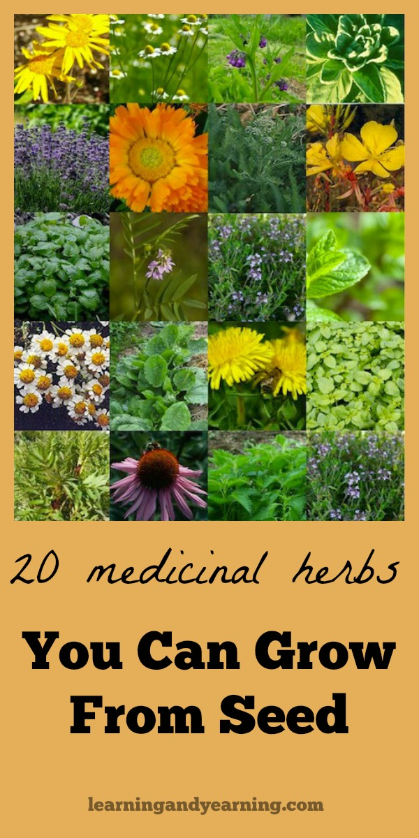 Is your local nursery's selection of medicinal herbs uninspiring? Thankfully, there are lots of medicinal herbs you can grow from seed.