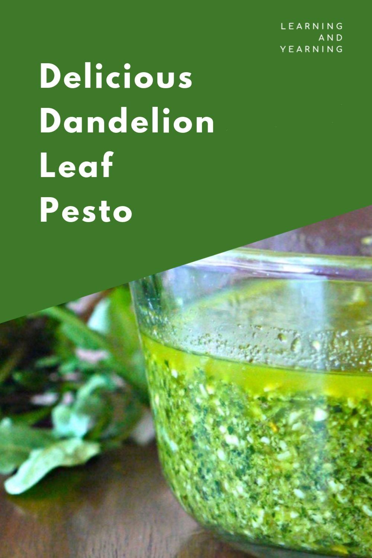 Delicious dandelion leaf pesto.