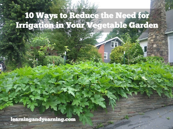 Here are 10 ways that you can begin to use right now to reduce the need for irrigation in your garden.