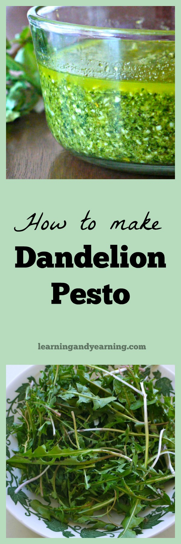 dandelion greens and dandelion pesto