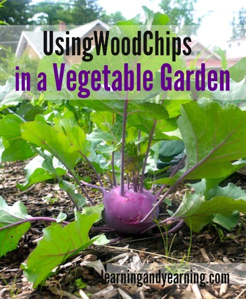 Wondering If Using Wood Chips In Your Vegetable Garden Is A Good Idea? Weu0027