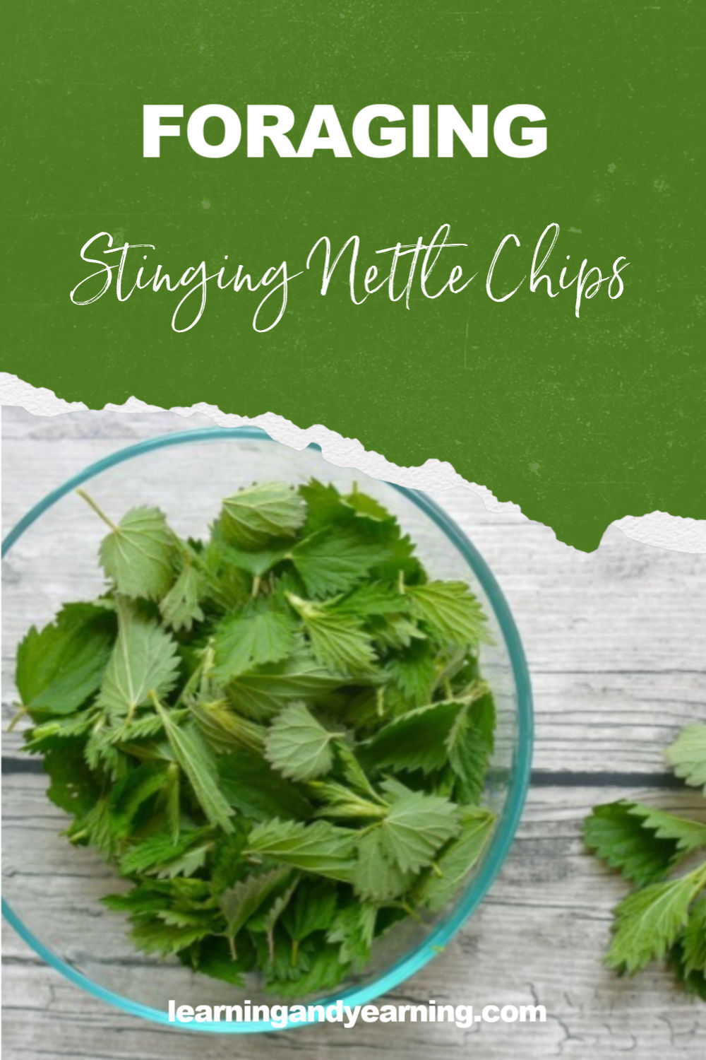 Stinging nettle chips! #foraging