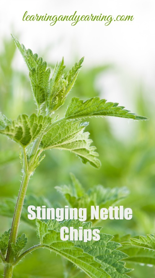 Move over kale. Make room for stinging nettle chips!!!