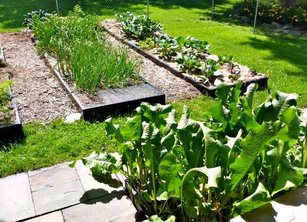P1130108 back garden