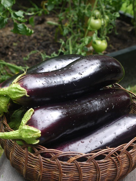 eggplant for dehydrating to be dehydrated