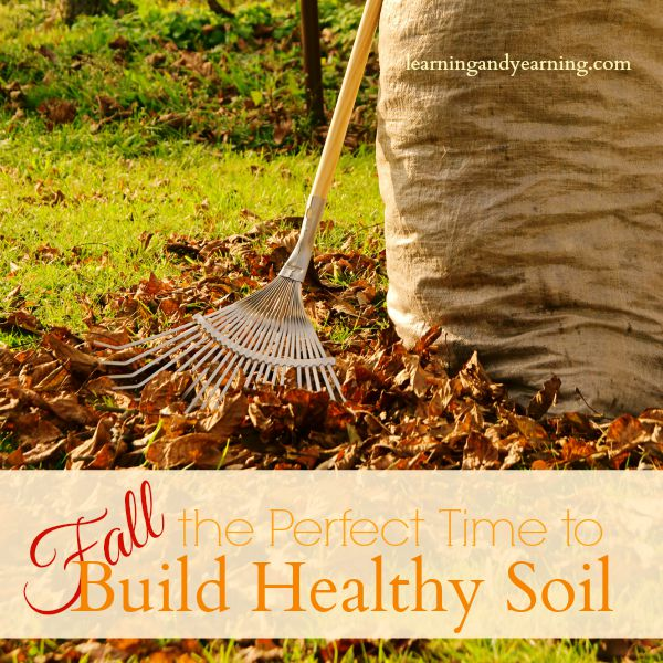 The active gardening season is winding down. You've harvested your vegetables and have been busy putting them up for the winter. But if you want another productive garden next year, don't make the mistake of thinking your job is now complete. What you do now to build healthy soil and put your garden to bed for the winter can make or break next year's garden.