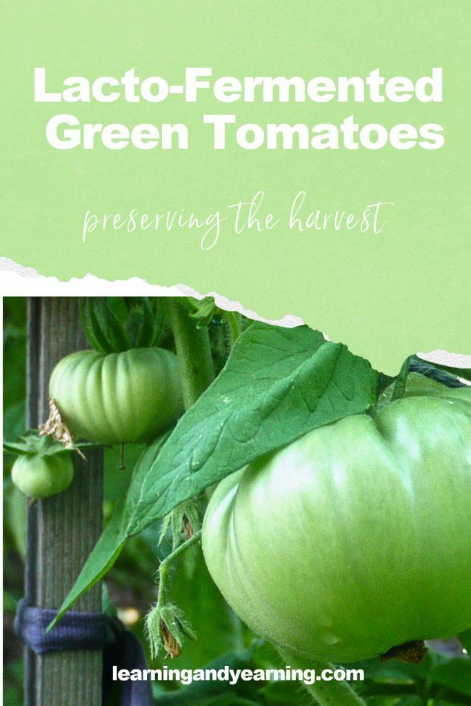 Lacto-fermented green tomato recipe!