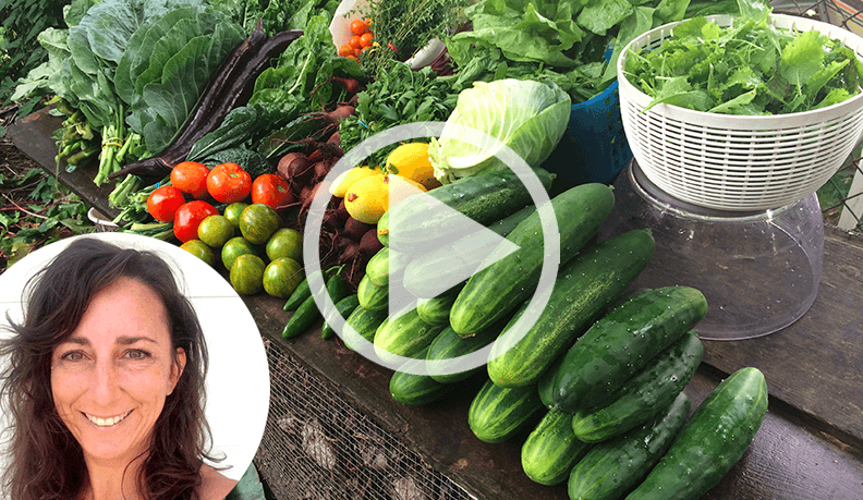 Learn to grow your own vegetables with this complimentary training series!