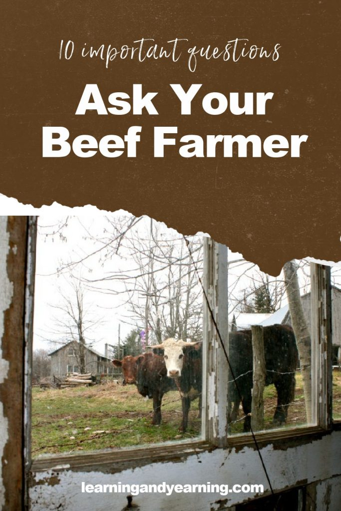 10 Important questions to ask your beef farmer!