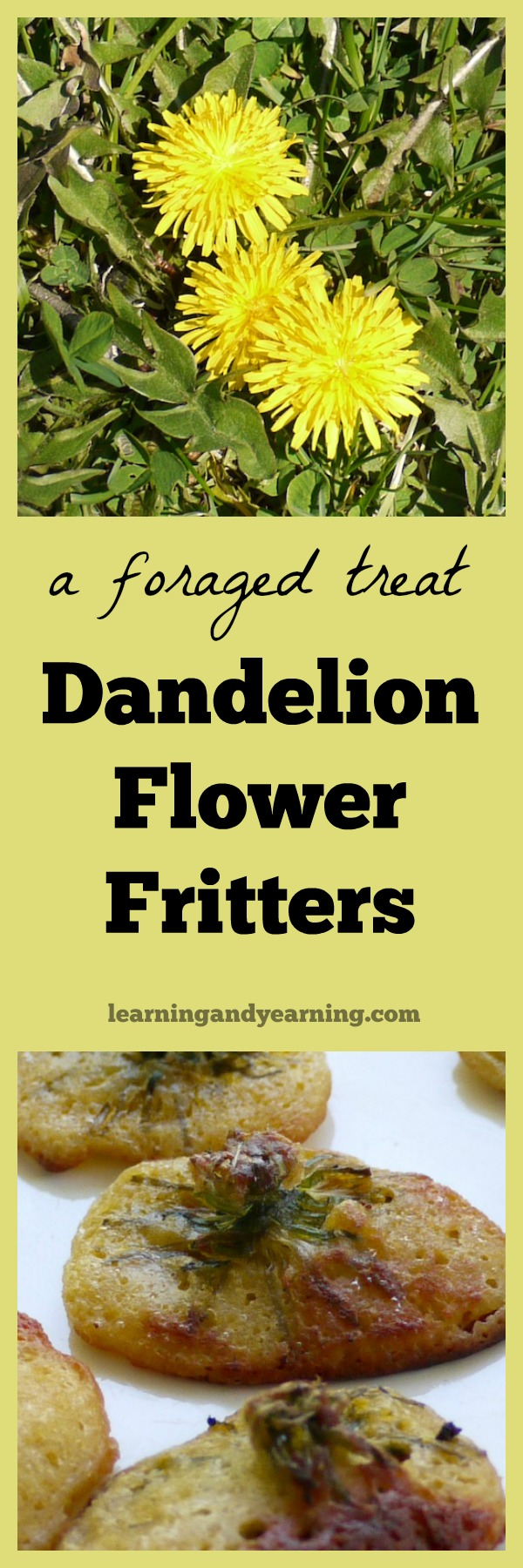 dandelion flowers and fritters
