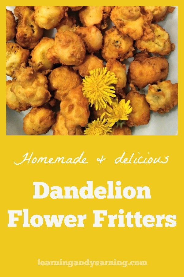 Many disparage dandelion, but there are some who celebrate it. The flowers, leaves and roots are all edible, and perfect for Dandelion Flower Fritters! #dandelion