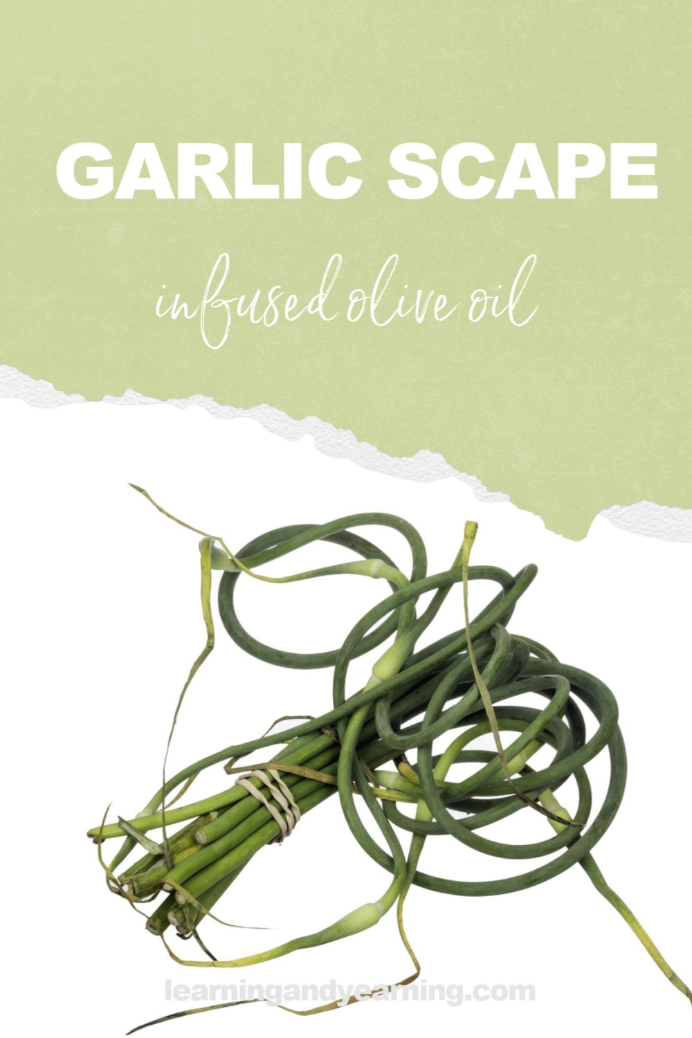 How to make garlic scape infused olive oil
