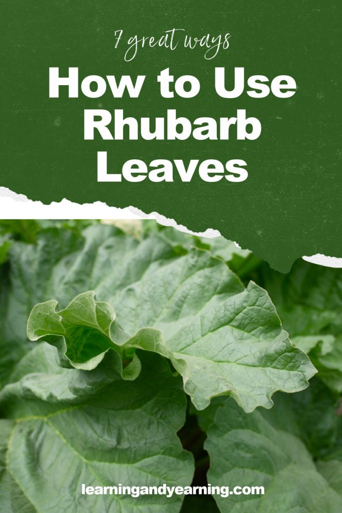 7 great ways to use rhubarb leaves!